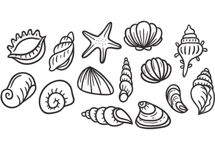 700x490 Clam Shell Archives My Graphic Hunt
