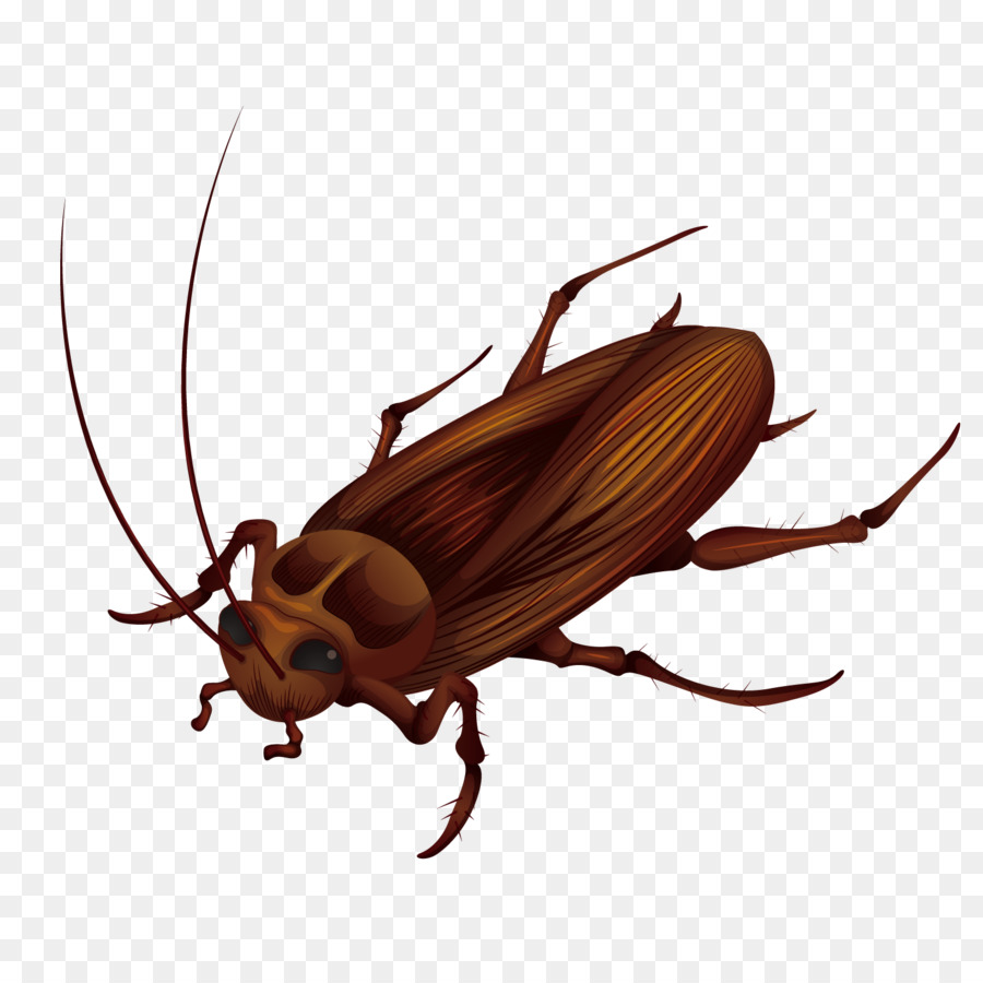900x900 Cockroach Anatomy Stock Photography Illustration