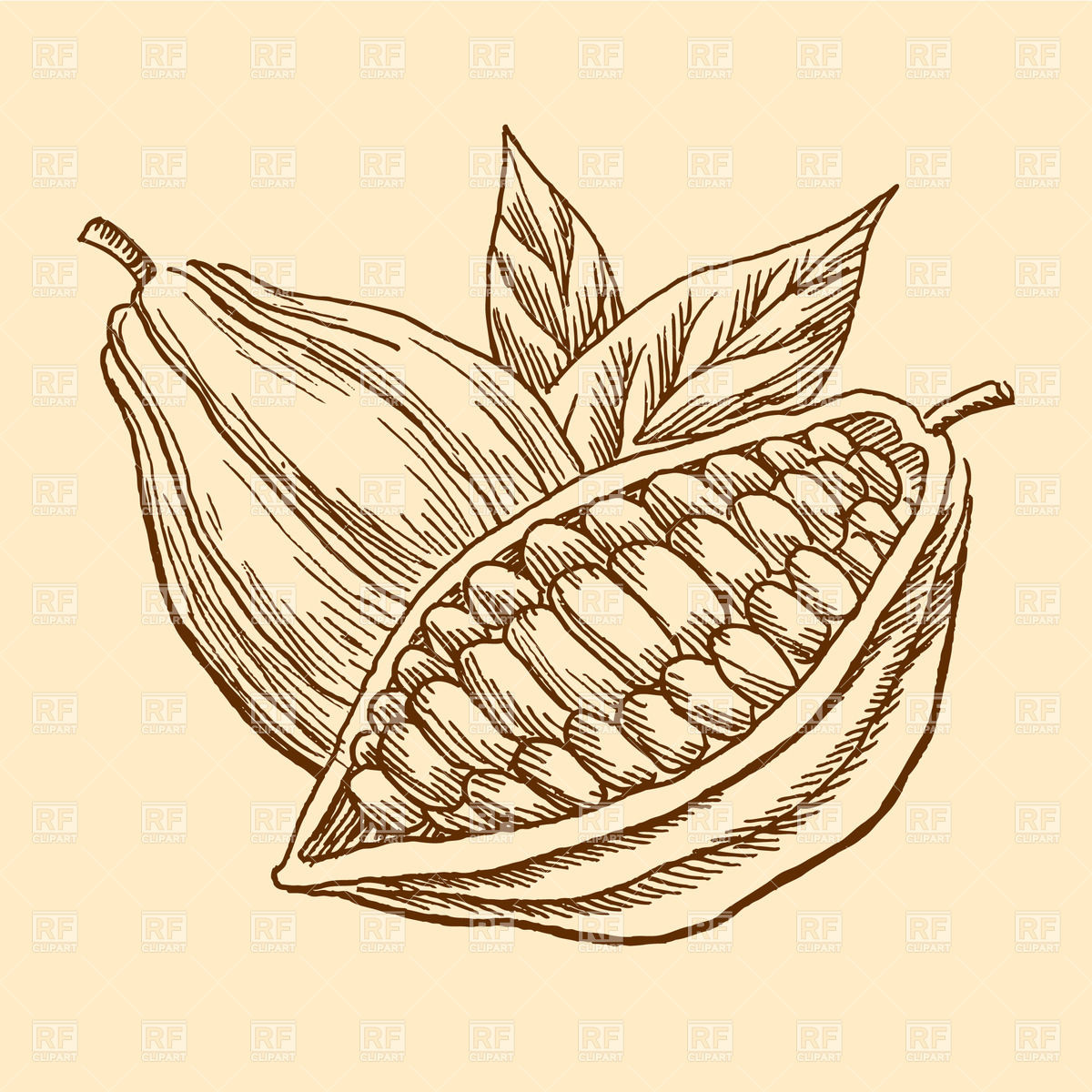 1200x1200 Engraving Image Of Cocoa Beans Vector Image Vector Artwork Of