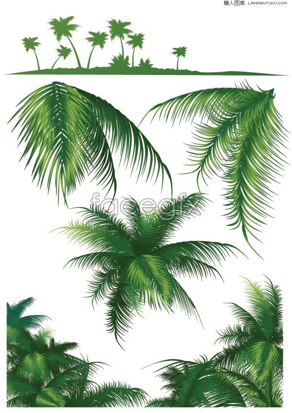 600x847 Coconut Palm Vector Graphics Palm, Tree Silhouette