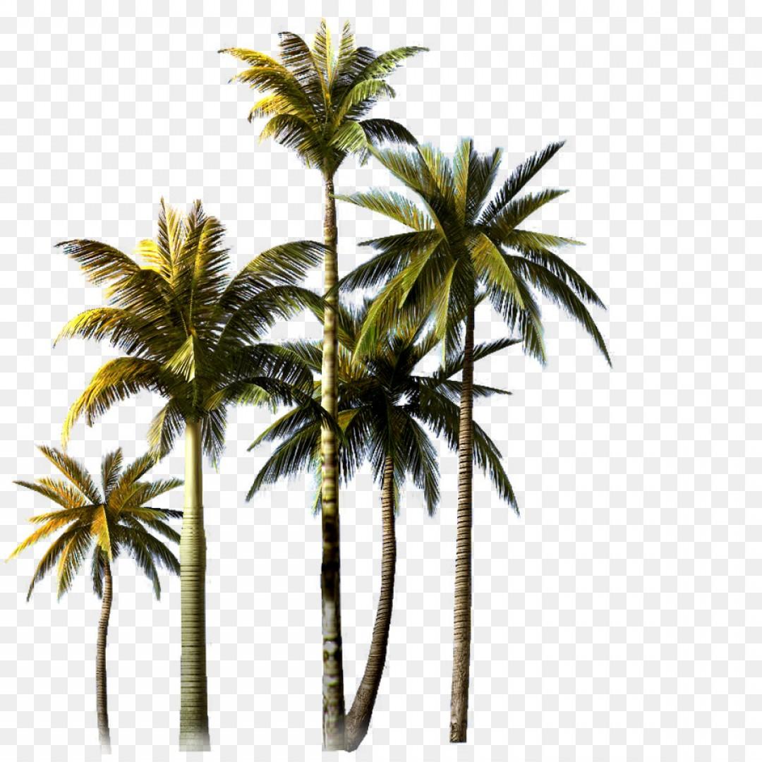 1080x1080 Png Coconut Tree Asian Palmyra Palm Euclidean Vector C Lazttweet