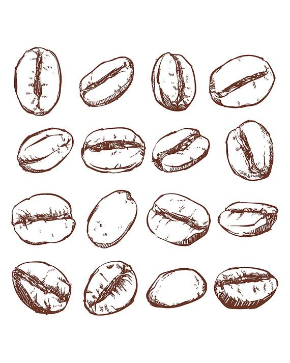 570x713 Collection Of Coffee Beans Drawing High Quality, Free