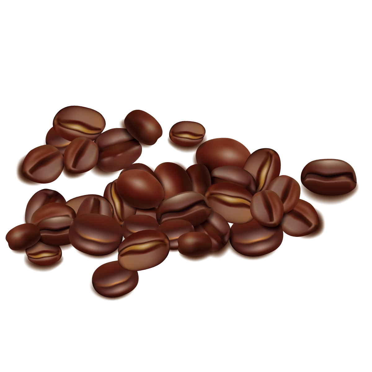1200x1200 Coffee Bean Seed