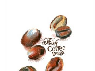 310x233 Coffee Beans Hand Drawing Vectors 02 Free Vectors Ui Download