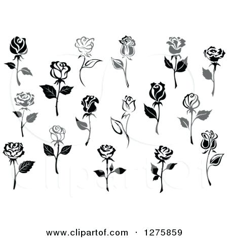 450x470 Rose Vector Free Of Black And White Rose Flowers 5 Royalty Free