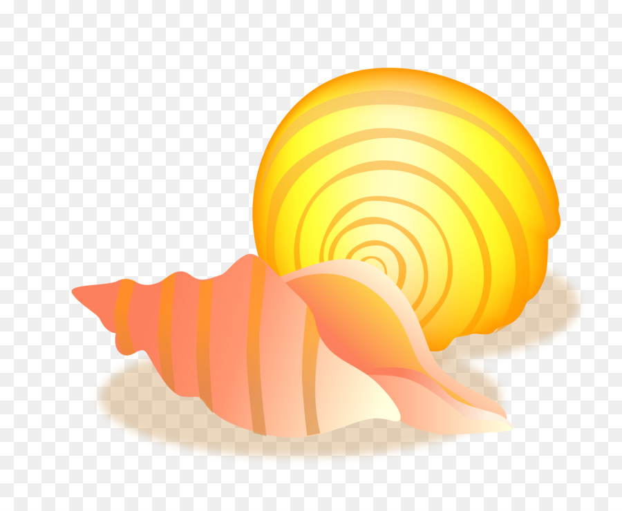900x740 Conch Sea Snail Seashell