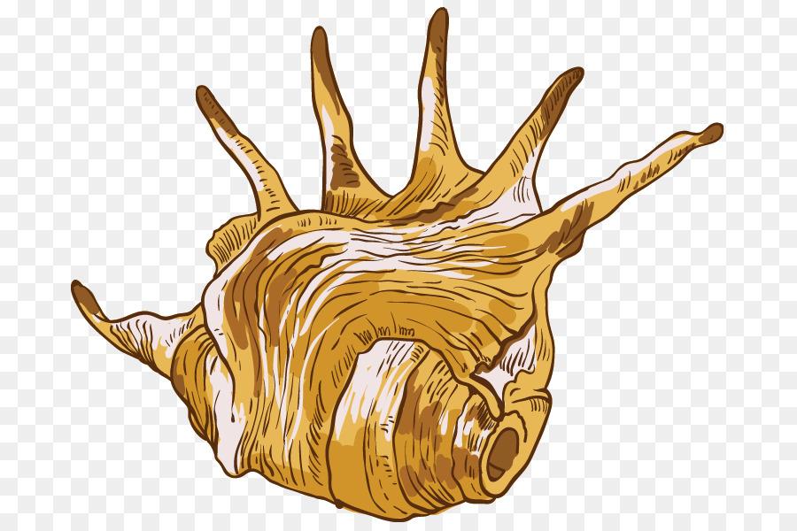 900x600 Conch Seashell Euclidean Vector