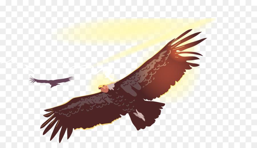 900x520 Bird Flight Owl Condor