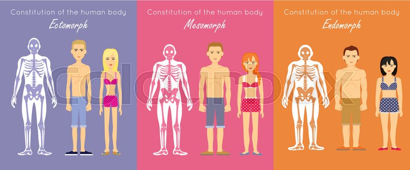 799x333 Human Body Constitution Vector Concept. Flat Design