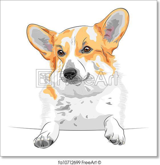 561x581 Free Art Print Of Vector Sketch Dog Pembroke Welsh Corgi Smiling