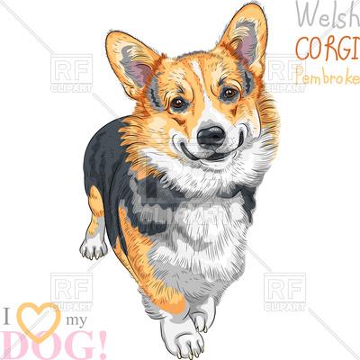 400x400 Sketch Of Dog Pembroke Welsh Corgi Vector Image Vector Artwork