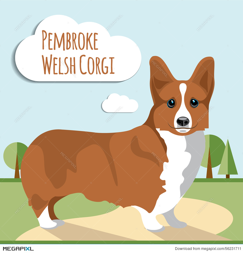 800x830 Welsh Corgi Vector Illustration 56231711