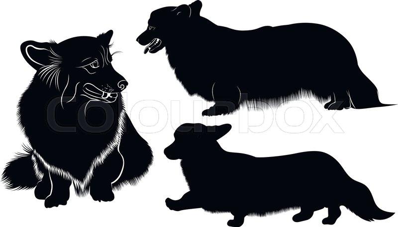 800x457 Welsh Corgi. Dog Breed Welsh Corgi. Silhouette Of A Dog Of Breed