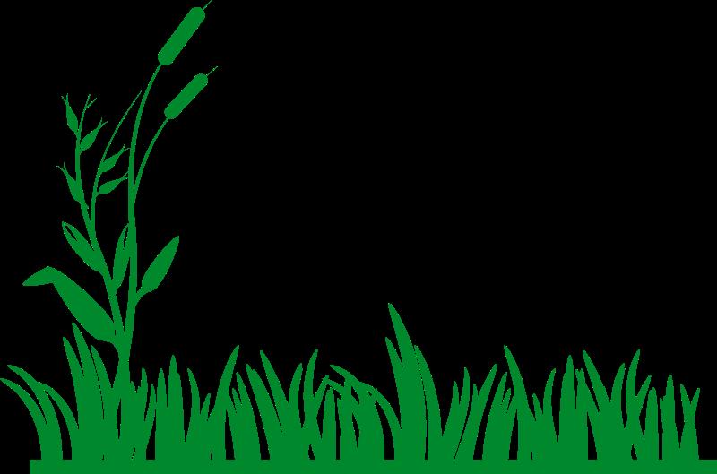Corn Field Vector
