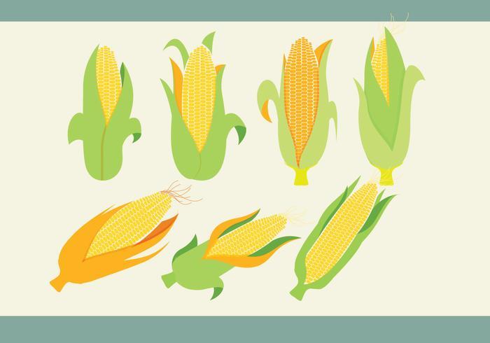700x490 Ear Of Corn Vectors