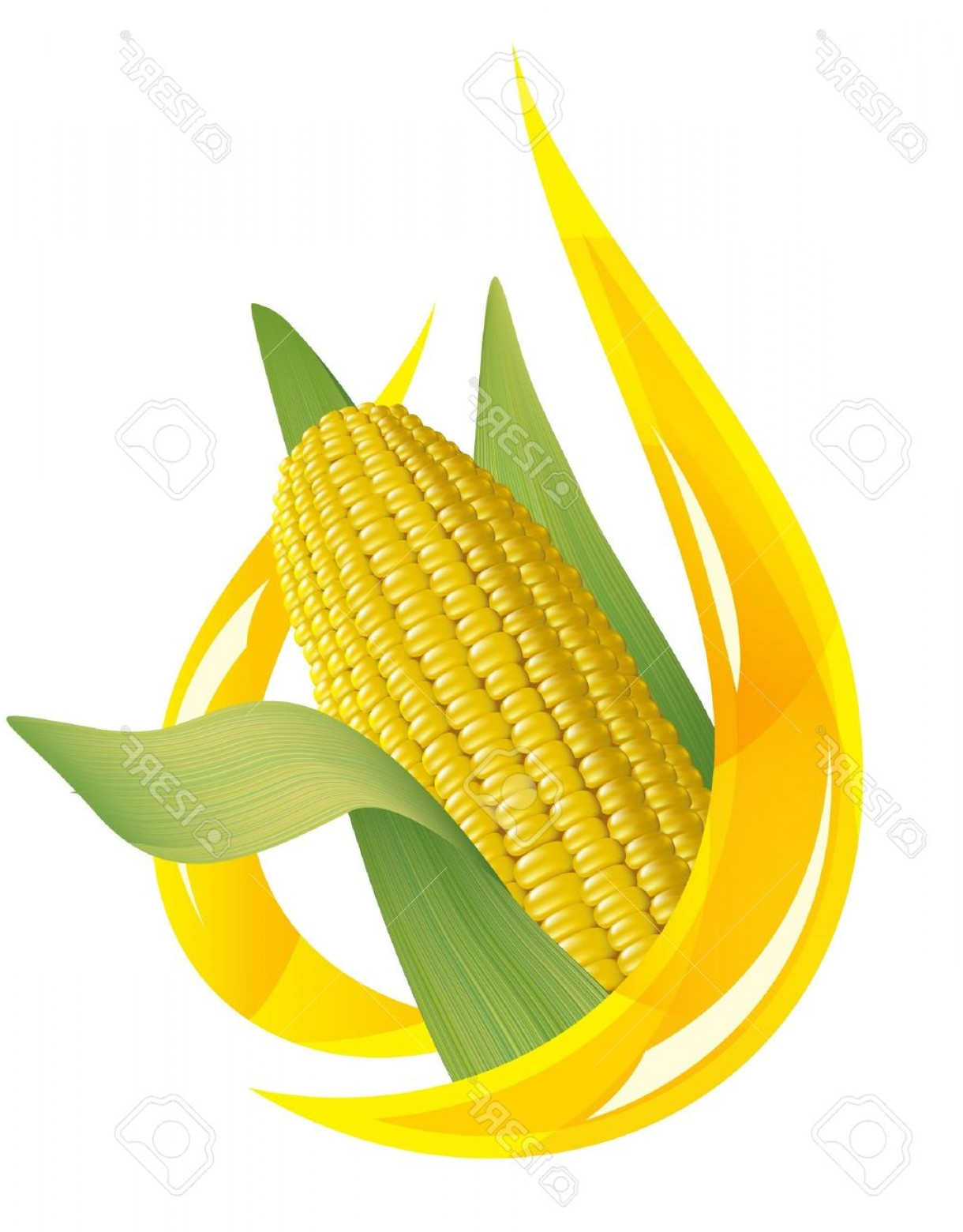 1220x1560 Photocorn Oil Stylized Drop Of Oil And Corn Cob Vector