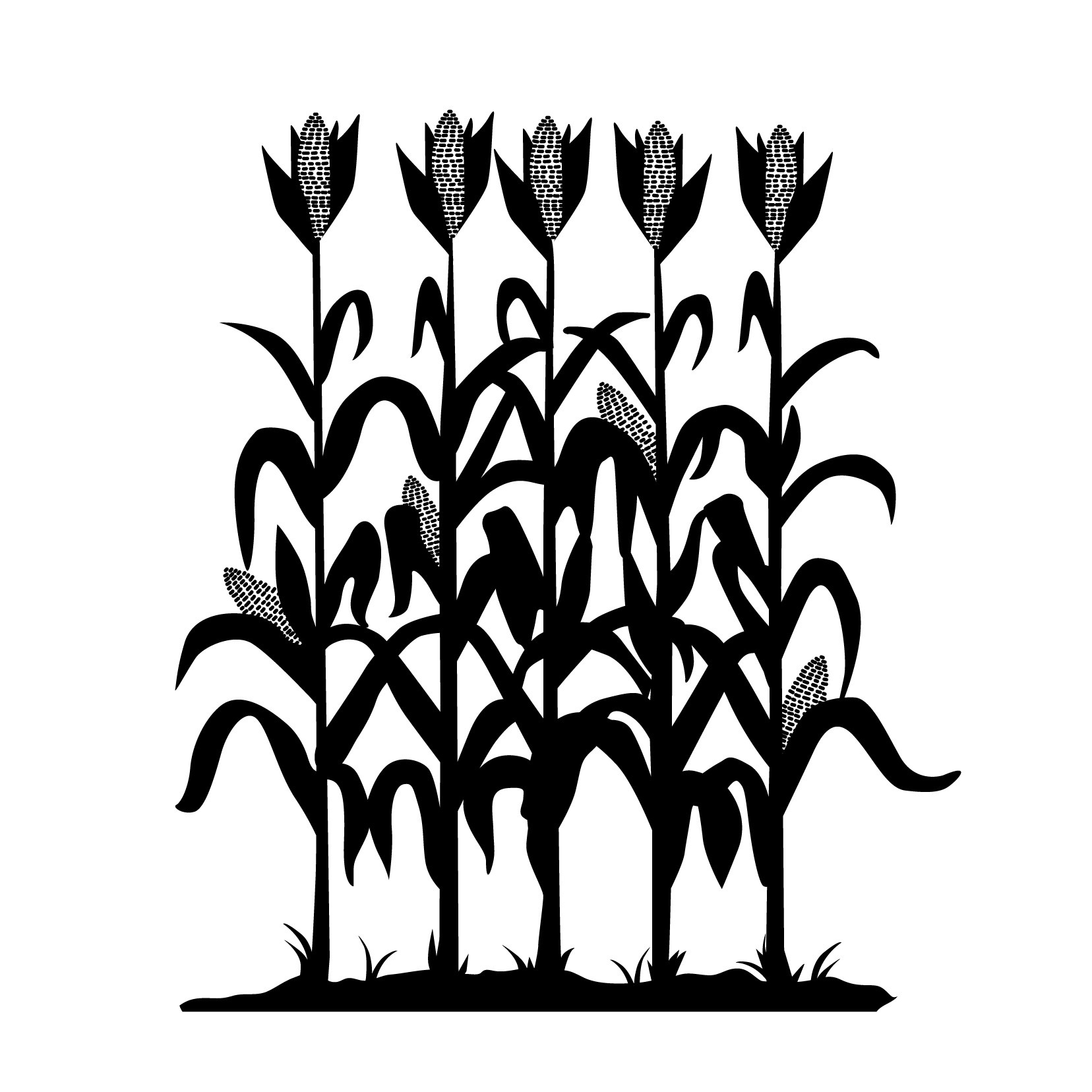 1656x1656 Corn Stalk Silhouette Vector