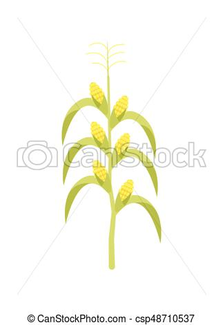 323x470 Corn On Stalk Vector Icon. Corn On Stalk Icon. Agricultural