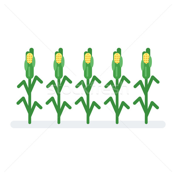 600x600 Corn Stalk Stock Vectors, Illustrations And Cliparts Stockfresh