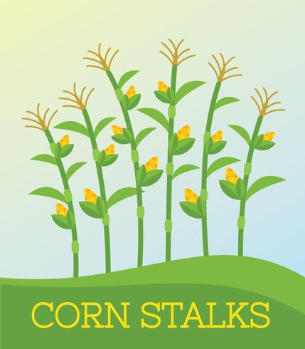 429x490 Free Corn Stalk Vector