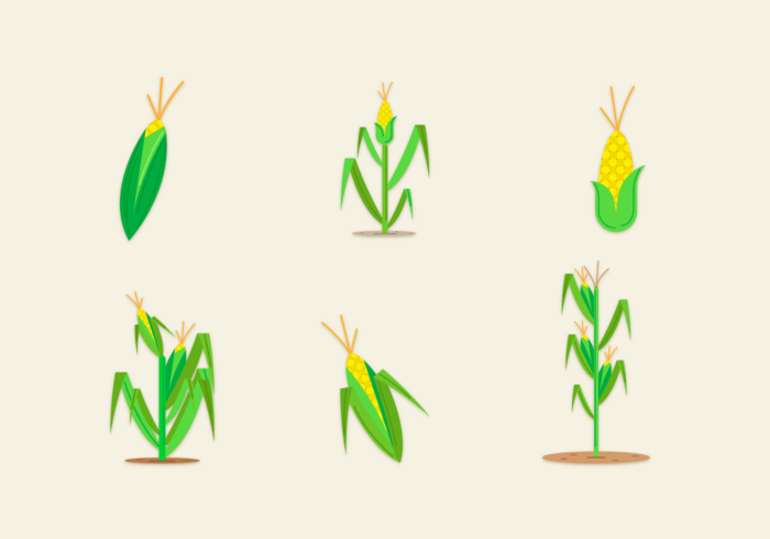 700x490 Corn Stalk Free Vector Art