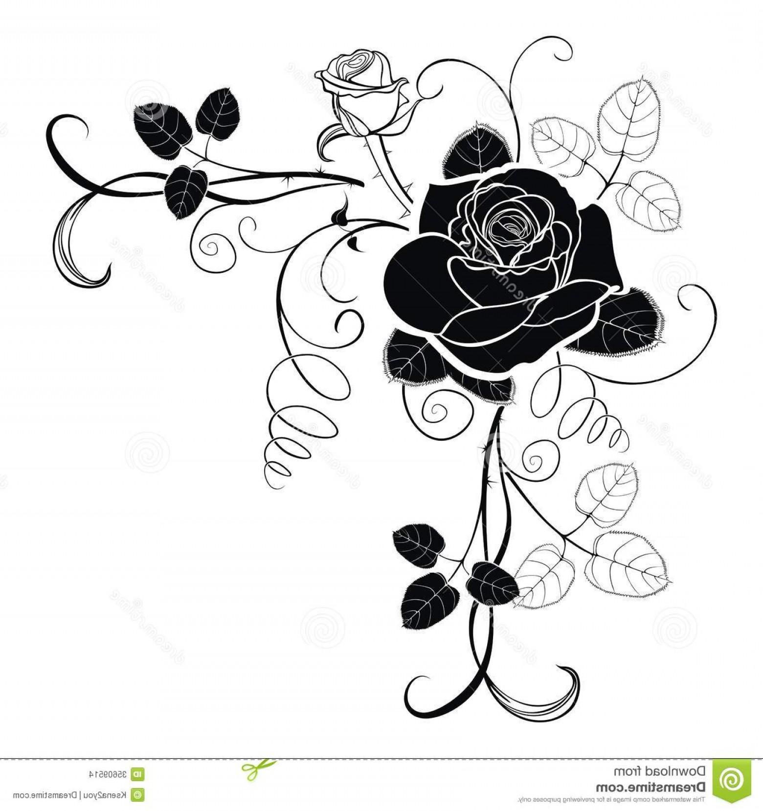 1560x1658 Stock Images Corner Decoration Rose Vector Background Roses Grunge