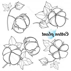 300x300 Vector Set Outline Cotton Boll Bunch Leaf Capsule Black Isolated