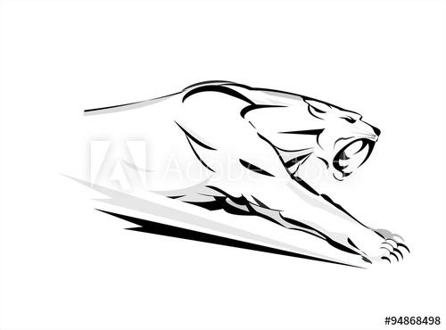500x370 Puma. Cougar, Running Cougar. Attacking Cougar. Fearless Cougar