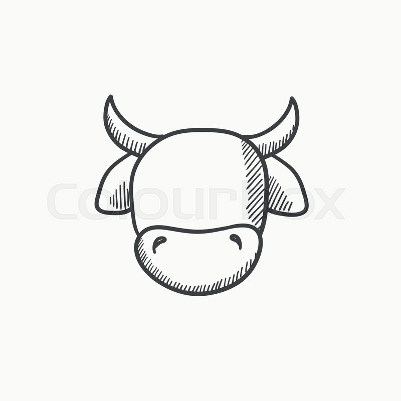 800x800 Cow Head Vector Sketch Icon Isolated On Background. Hand Drawn Cow