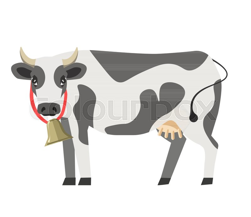 800x692 Cow With Neck Bell Flat Isolated Icon. Vector Farm Or Dairy And