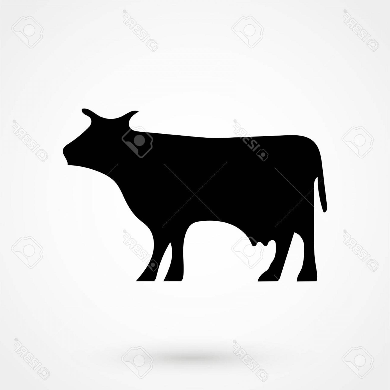 1560x1560 Photostock Vector Cow Icon Vector Silhouette Cow Cow Icon Vector