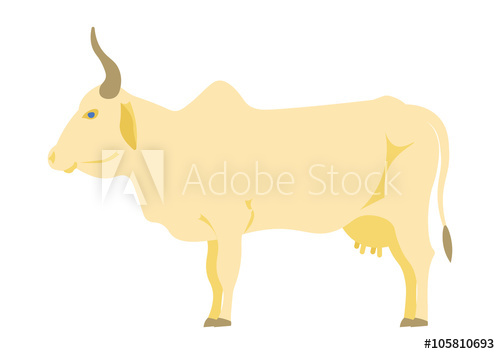 500x354 Indian Cow Vector Illustration. Indian Cow On The White Background