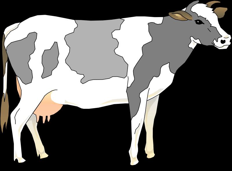 800x591 Cow 3 Free Vector 4vector