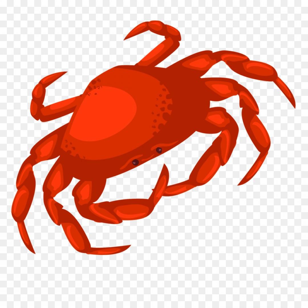 1080x1080 Png Dungeness Crab Vector Hand Drawn Cartoon Crab Shopatcloth