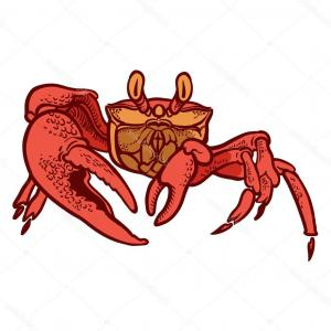 300x300 Stock Illustration Detailed Hand Drawing Crab Vector Arenawp