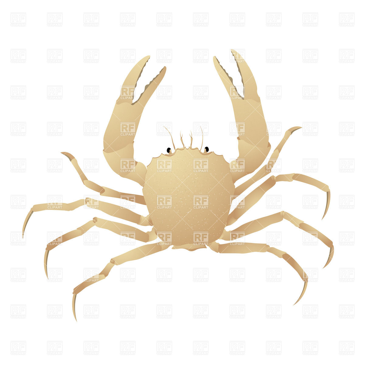 1200x1200 Crab Vector Image Vector Artwork Of Plants And Animals Lirch