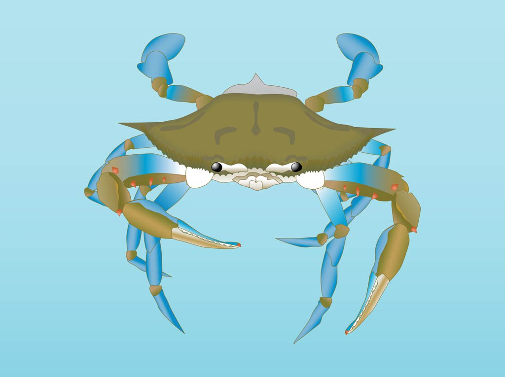 1024x765 Vector Crab Vector Art Amp Graphics