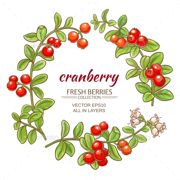 590x590 Cranberry Vector Set By Cuttlefish84 Graphicriver
