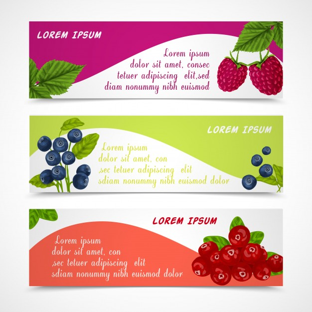626x626 Cranberry Vectors, Photos And Psd Files Free Download