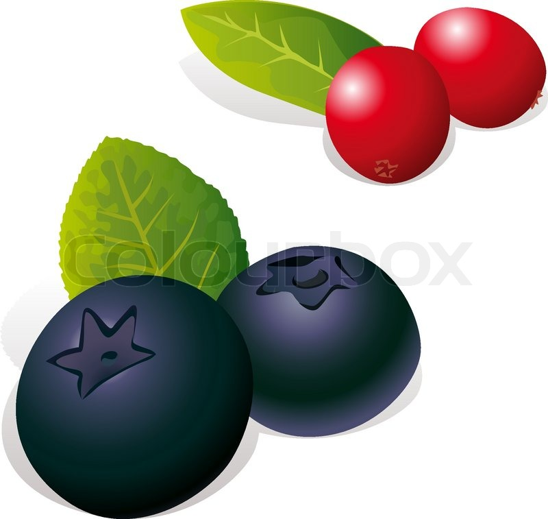 800x757 Blueberry And Cranberry Stock Vector Colourbox