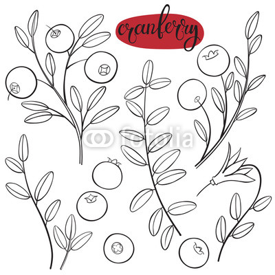 400x400 Cranberry. Vector Hand Drawn Illustration On A White Background