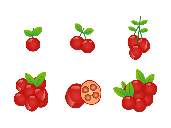 653x490 Realistic Red Cranberries Vector