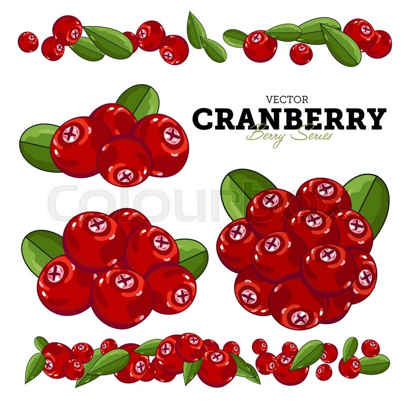 800x800 Set Cranberry Compositions, Cranberry Leaves, Cranberry Vector