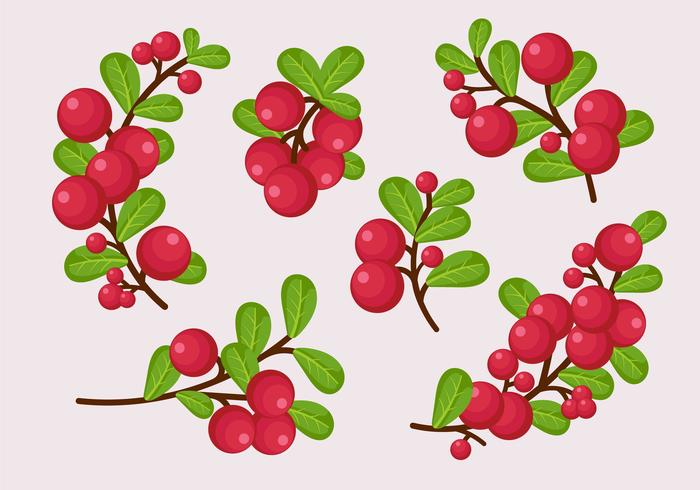 700x490 Cranberries Twig With Leaves