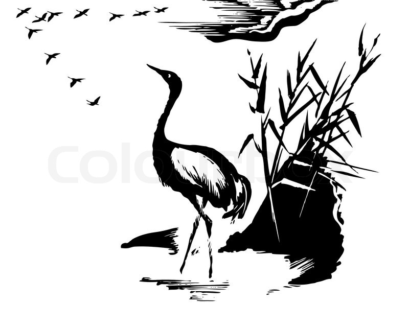 800x640 Vector Illustration Of The Crane On White Background Stock