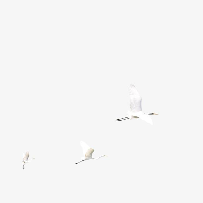 650x650 Crane Bird, White, Crane Vector, Bird Vector Png And Psd File For