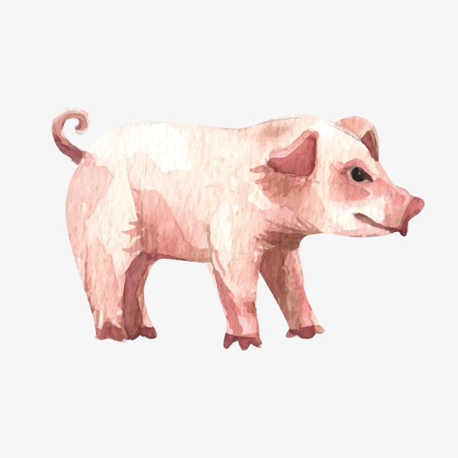 650x651 Watercolor Effect Cute Pig, Watercolor Vector, Pig Vector, Vector