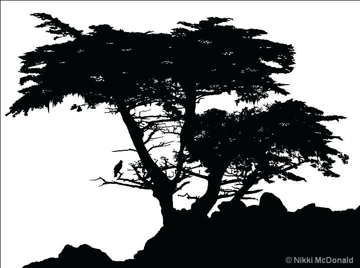 718x535 Cypress Tree Silhouette Fir Tree Many Tree Bald Cypress Tree