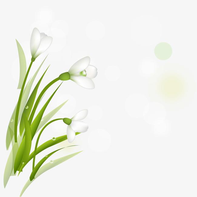 650x651 Spring New Fresh Daffodil Vector, Fresh Daffodils, Spring Vector