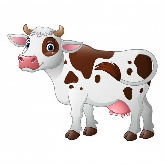 626x626 Dairy Cow Vectors, Photos And Psd Files Free Download